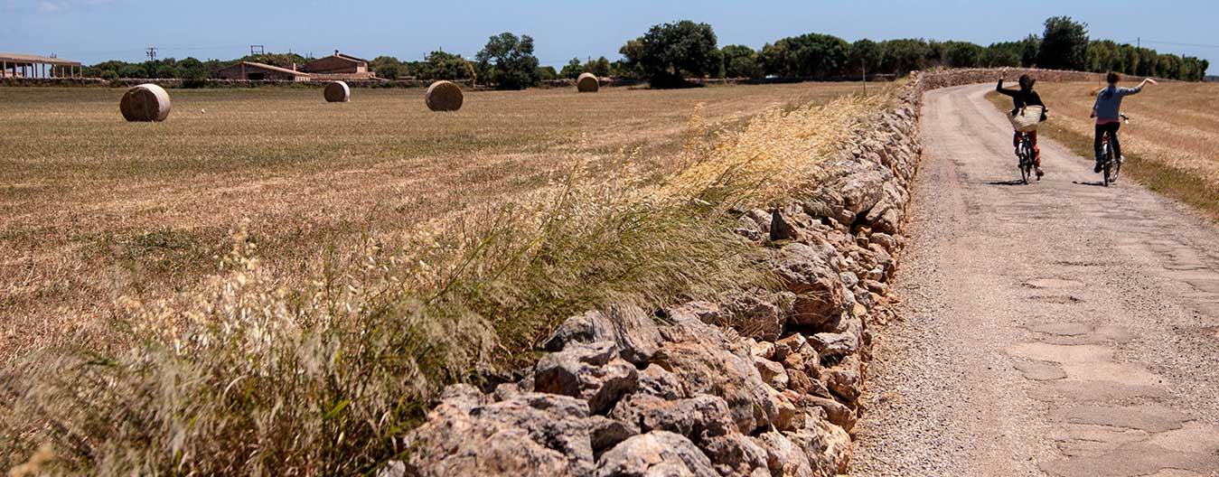 camins-rurals-i-rutes-de-cicloturisme-a-campos