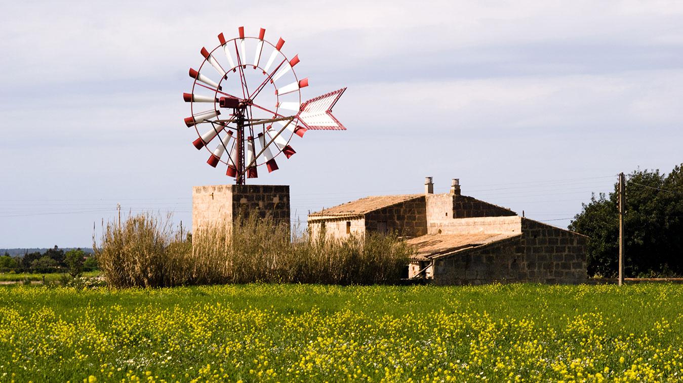 Campos Windmühlen, mills of Campos, molins de Campos, molinos de Campos